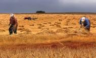 ssk tarım sigortası